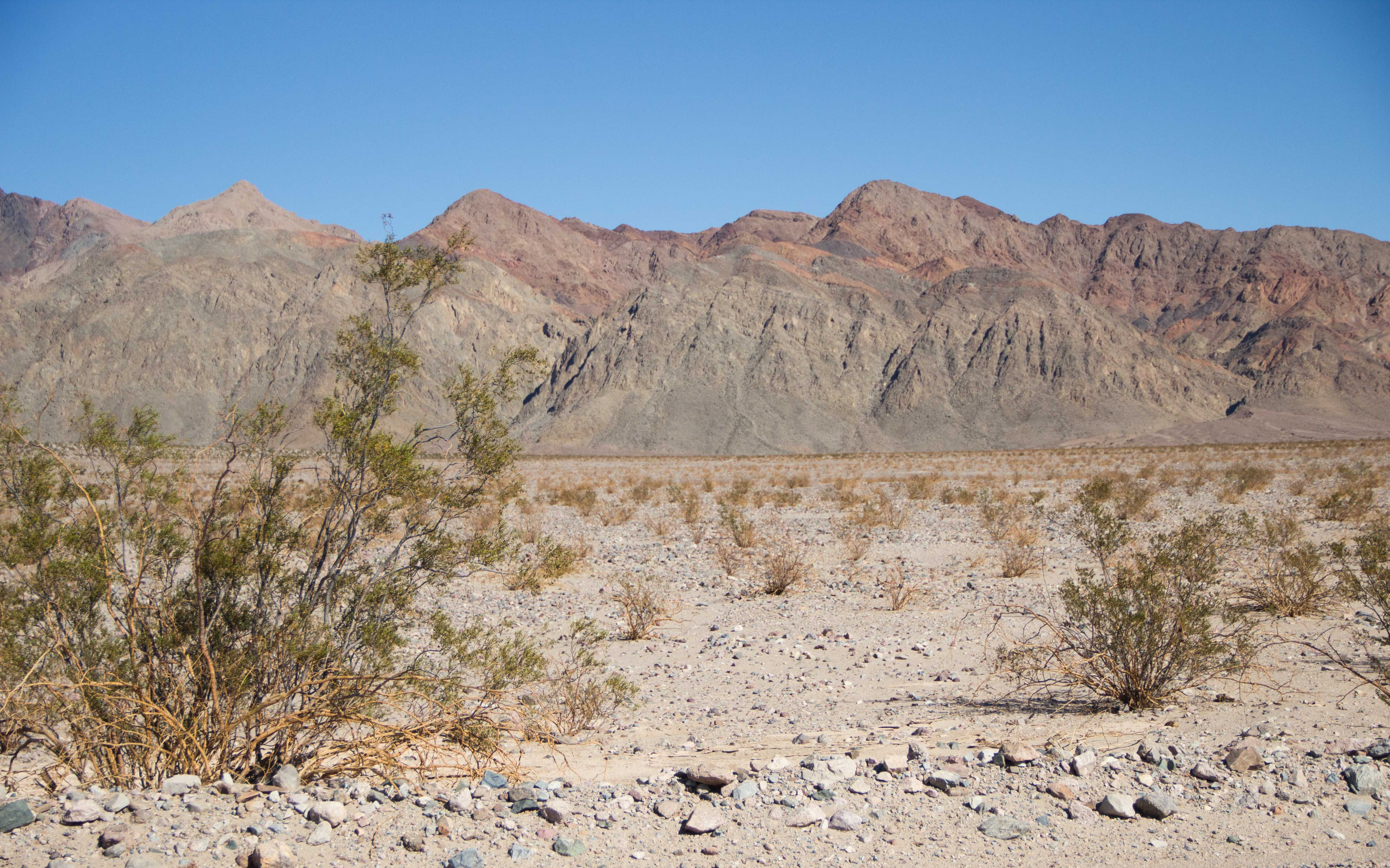 IMG_5525.jpg - Death Valley RT2014